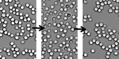 "Synopsis: Reversible Self-Assembly of Macroscopic ""Polymers"""