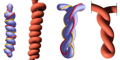 Synopsis: Simulations Unravel Fibers' Twisted Topology