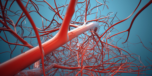 Synopsis: Vessel Dilation Controls Metabolite Flow in the Brain