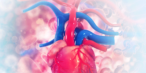 Synopsis: Age Determines How a Human Aorta Stretches