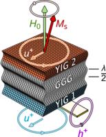 Coherent long-range transfer of angular momentum between magnon Kittel modes by phonons
