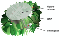 Translational nucleosome positioning: A computational study