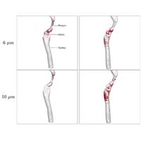 Simulation of microparticle inhalation in rhesus monkey airways