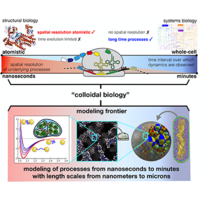Colloidal hydrodynamics of biological cells: A frontier spanning two fields