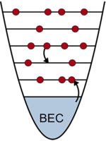 Observation of Atom Number Fluctuations in a Bose-Einstein Condensate