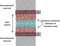 Investigation of the hydration shell of a membrane in an open system molecular dynamics simulation