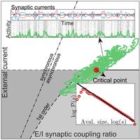 Synaptic balance due to homeostatically self-organized quasicritical dynamics