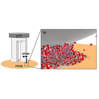 Direct Evidence for Curvature-Dependent Surface Tension in Capillary Condensation: Kelvin Equation at Molecular Scale